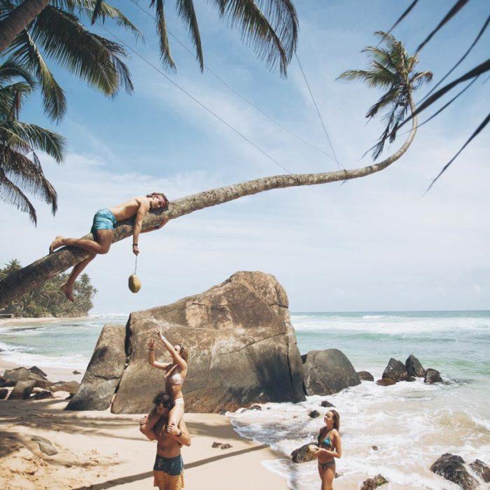 palmtree-srilanka